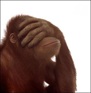 20090528142518-monkey.jpg